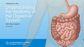Understanding the Anatomy of the Digestive System