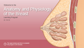 Anatomy and Physiology of the Breast