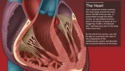 Understanding the Anatomy of the Cardiovascular System