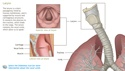 Understanding the Anatomy of the Respiratory System