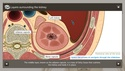 Understanding the Anatomy of the Urinary System